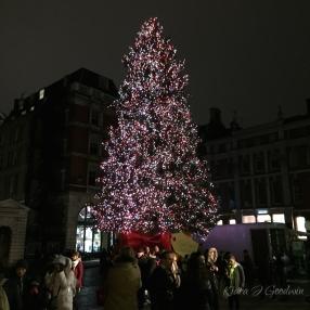 The Christmas lights were still up.